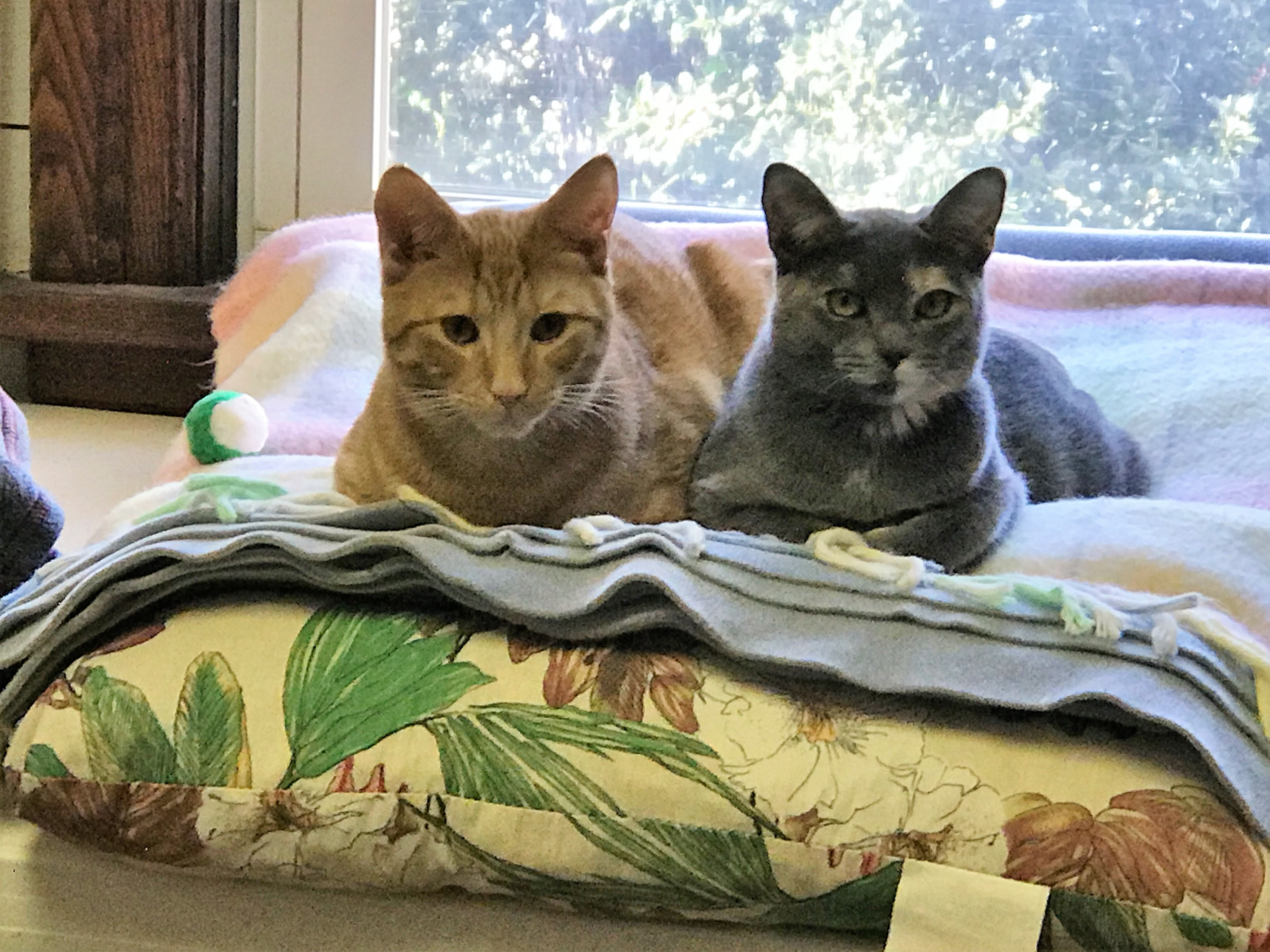 "Cats Up For Adoption in Sea Isle Looking For ""Purrfect"" Home"